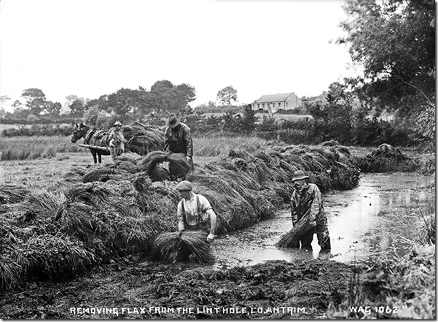 Cloney Farm